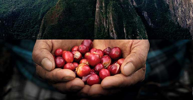 Nespresso Professional Perú Organics