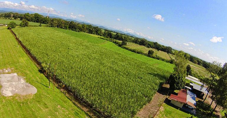 Circa Raw Cane Sugar plantacion