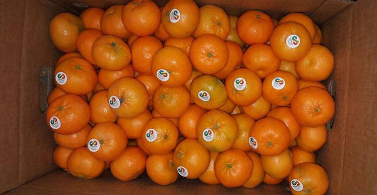 castelló ruta del sabor naranjas