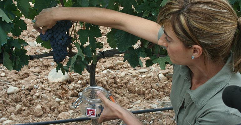 Control de vendimia Rioja