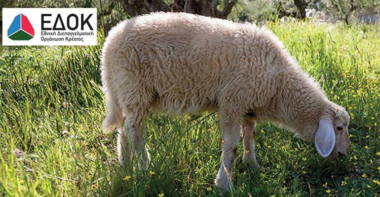 Meet the Lamb