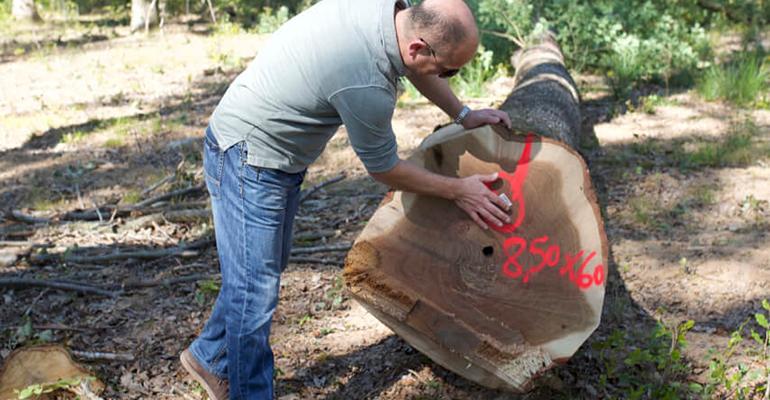 selección del roble para barricas Bodegas Luis Alegre